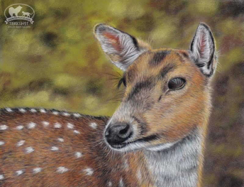 Waldtiere malen in Softpastell auf Velourpapier